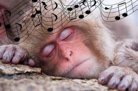 sleepmonkey
