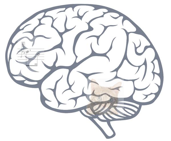 BrainCat